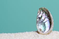 Regnbågsskimrande abaloneskal på vit sand på turkosbakgrund Arkivfoto