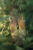 regnbågsskimrande spiderweb Arkivfoton