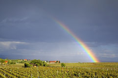Regnbåge över vingårdfält Riquewihr Alsace, Frankrike Royaltyfri Bild
