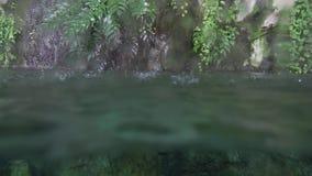 Regndroppar faller in i det tropiska dammet Vatten för övergång från under till videoen för landmateriellängd i fot räknat stock video