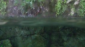 Regndroppar faller in i det tropiska dammet Vatten för övergång från under till videoen för landmateriellängd i fot räknat lager videofilmer