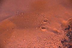 Regndroppar i den röda sanden i Nevada Arkivfoto