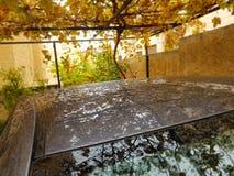 Regndroppar på bilen som parkeras under ett druvaträd royaltyfria bilder