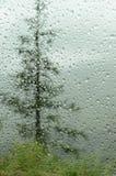 Regndroppar på bilfönster i skog Arkivfoton