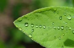 regndroppar på bladet Royaltyfri Fotografi