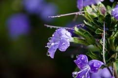 Regndroppar på blomman royaltyfri foto