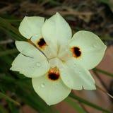 Regndroppar på blomman Arkivfoton