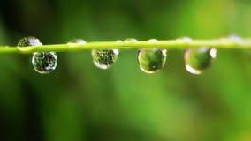 Regndroppar på den gröna växten royaltyfria bilder