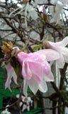 Regndroppar på en blomma Royaltyfri Foto