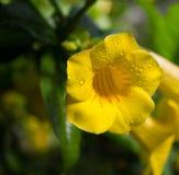 Regndroppar på en blomma under strålarna av solen arkivbild
