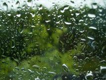 Regndroppar på fönstret på den gröna bakgrunden av träd royaltyfri bild