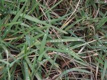 Regndroppar på gräs arkivbild