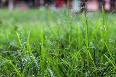Regndroppar på gräs Arkivfoton