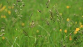 Regndroppar på gräset stock video