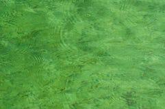 Regndroppar på grön sötvatten Royaltyfria Bilder