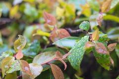 Regndroppar på gröna sidor med Bokeh royaltyfri bild
