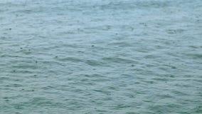 Regndroppar på havet lager videofilmer