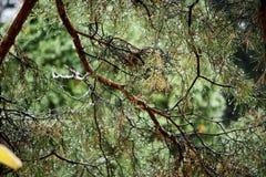 Regndroppar på trädet Arkivbilder