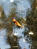Regndroppar på vattnet Royaltyfria Bilder
