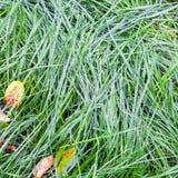 Regndroppar på grönt gräs i höst Arkivbilder