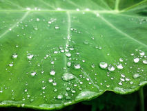 Regndroppar som faller på en bladbakgrund Royaltyfri Bild