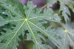 Regnen auf Blume Stockbild