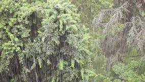 Regnen auf der Stadt stock video