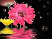 Regnen der Gänseblümchen Stockbilder