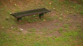Regnen im Park stock video footage