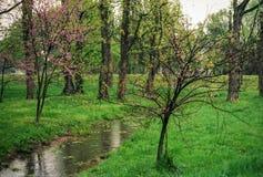 Regnen Sie gefüllten Strom und rosa Knospungsblumen in einem grünen Potomac-Park Virginia Stockfoto