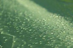 Regnen Sie Tropfen auf dem grünen wasserdichten Zeltblatt lizenzfreie stockfotografie
