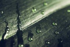 Regnen Sie Tropfen auf dunkelgrünem Blatt, Makroschuß Ruhiger Frühlingsnatur-Florahintergrund Stockfotografie
