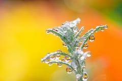 Regnen Sie Tropfen auf einer Grünpflanze, mit einem bunten unscharfen Hintergrund lizenzfreie stockbilder