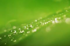 Regnen Sie Tropfen über neuer grüner Blattbeschaffenheit, natürlicher Hintergrund Lizenzfreie Stockbilder