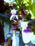 Regnen von Farbe und von Blumen lizenzfreies stockbild
