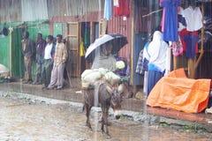 Regnen von Jahreszeit Lizenzfreies Stockbild