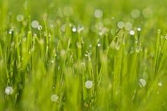 Regnen von Tropfen auf einem grünen Gras Lizenzfreies Stockfoto