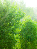 Regnerische äußere Fenstergrün-Hintergrundbeschaffenheit Stockfoto