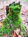 Regnerische Natur des grünen Holzbaum-Blattes wild Stockfoto