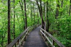 Regnerische Promenade durch den Wald Lizenzfreie Stockbilder