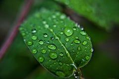 Regnerische Tropfen auf einem grünen Blatt Lizenzfreies Stockbild