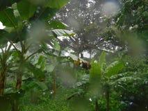 Regnerischer Dschungel Stockfotografie
