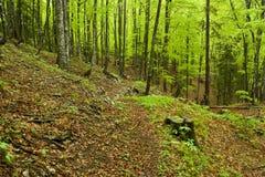 Regnerischer Frühlingswald, Kroatien Lizenzfreies Stockbild