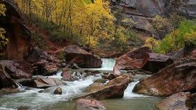 Regnerischer Tag auf dem Jungfrau-Fluss in Zion Canyon stock video
