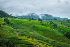 Regnerischer Tag mit grünem terassenförmig angelegtem Reisfeld bei Bong Piang in Mae Chaem, Chiang Mai, Thailand lizenzfreie stockfotografie