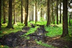 Regnerischer Wald stockfoto