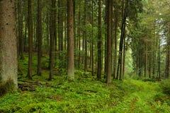 Regnerischer Wald Lizenzfreie Stockfotografie