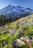Regnerischerer Wildflower günstig Stockbild