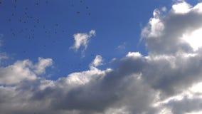 Regnerisches Wolken- und Vogelfliegen stock footage