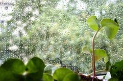 regnfönster Arkivbilder